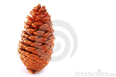 Standing - pine cone