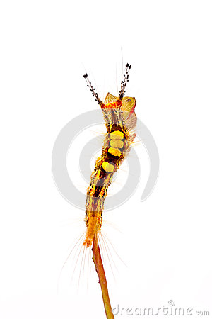 Stange caterpillar