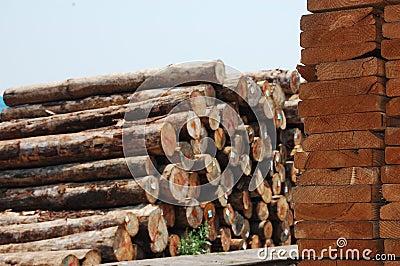 Stapel der hölzernen Vorstände und des ursprünglichen Holzes