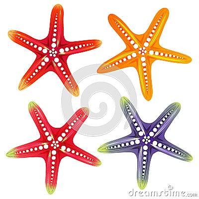 Free Star Fish Element Stock Photo - 117968750