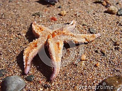 Star Fish on Sand