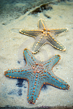 Free Star Fishes On A Sand Royalty Free Stock Photos - 58060498