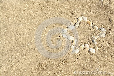 A star made of sea-shells