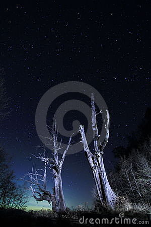 Free Star Trails(Husband And Wife Tree) Royalty Free Stock Photography - 20230867