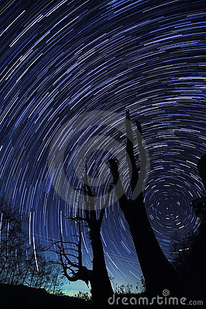 Free Star Trails(Husband And Wife Tree) Royalty Free Stock Photography - 20230897
