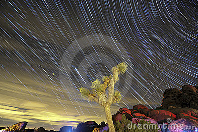 Star trails and Joshua tree in California