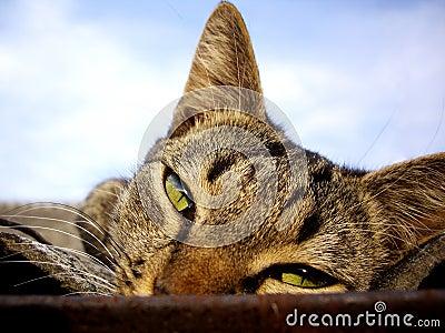Stare der Katze