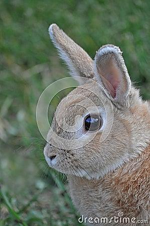 Starend konijntje