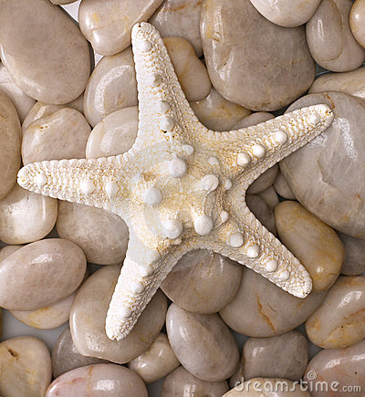 Free Starfish Stock Photography - 1262992