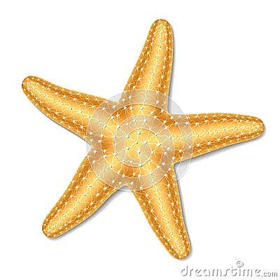 Clip Art Starfish Clip Art starfish stock illustrations 13910 vectors clipart dreamstime