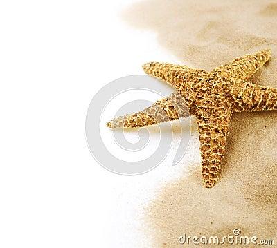 Free Starfish Royalty Free Stock Photo - 18971445