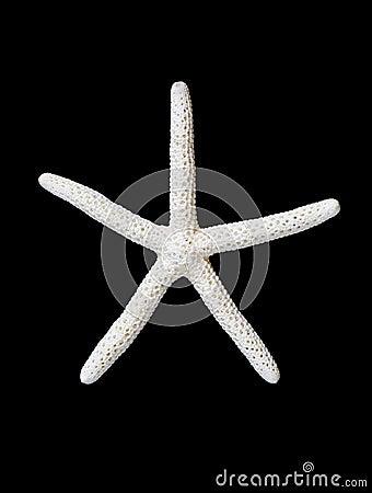 Free Starfish Royalty Free Stock Image - 25085336