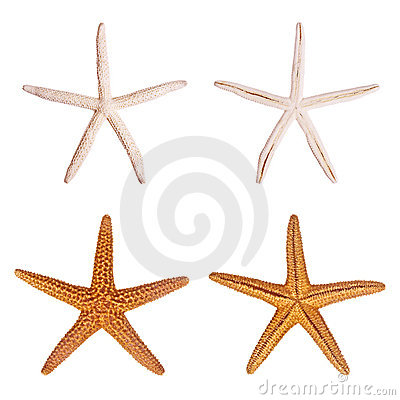 Free Starfish Stock Photography - 3085362