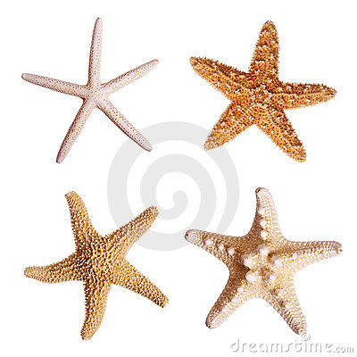 Free Starfish Royalty Free Stock Photo - 3090335