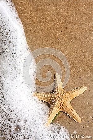 Free Starfish Stock Image - 3694631