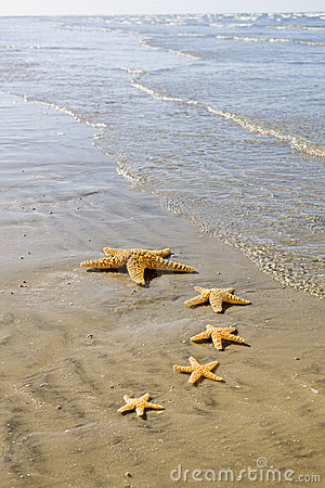 Starfish Stock Photography - Image: 9334612