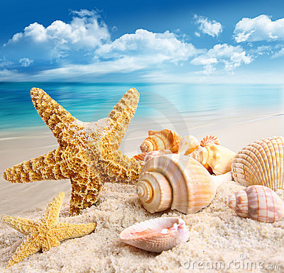 Free Starfish And Seashells On The Beach Royalty Free Stock Photos - 20283478