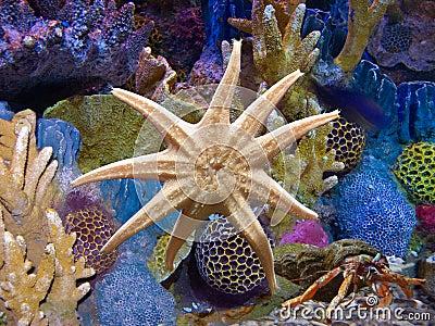 Starfish in Aquarium Exotic