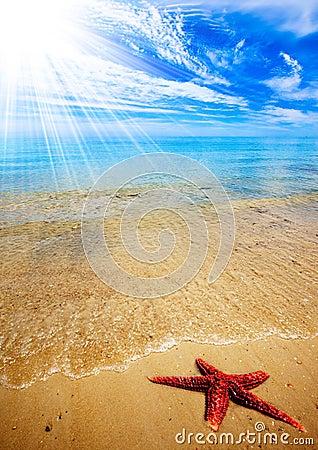 Free Starfish Beach Stock Photos - 18586143