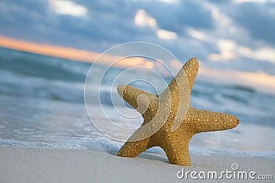 Starfish on beach, blue sea and sunrise