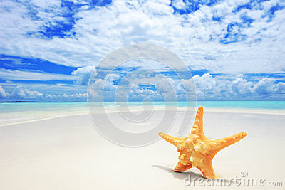 A starfish on a beach at Maldives island