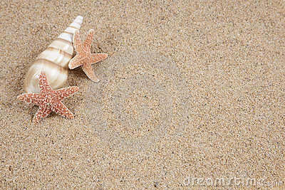 Starfish in the beach sand - copy