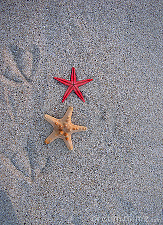 Starfish and bird traces of the sand