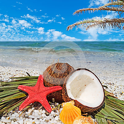 Starfish, coconuts and palm