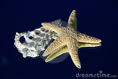 Starfish And Cross Section Of A Seashell Stock Images ...