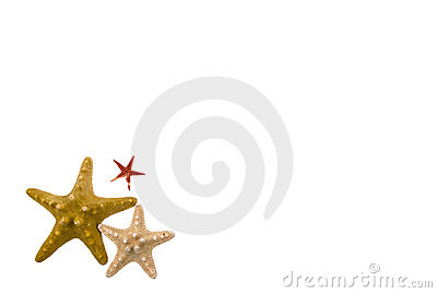 Vector frame with a picture of a sea wave. Making of the starfish ...