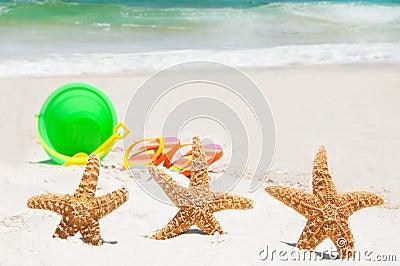 Starfish on holiday