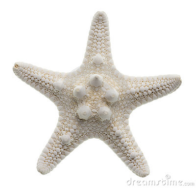 Free Starfish Isolated On White Royalty Free Stock Photos - 7582608