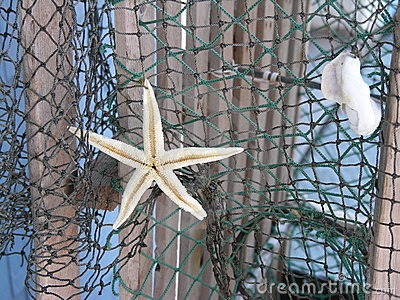Starfish on net