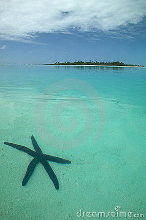 Starfish in the Ocean