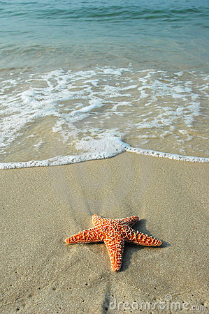 Starfish and the Ocean