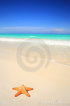 Free Starfish On Tropical Beach Stock Photos - 10726383
