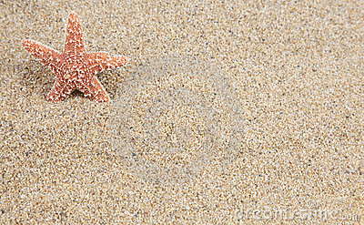 Starfish sand background