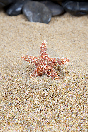 Starfish on sand background