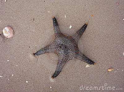 Starfish in sand on beach