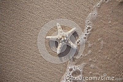 Starfish Sand Beach Background