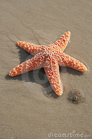 Starfish and Sand Dollar