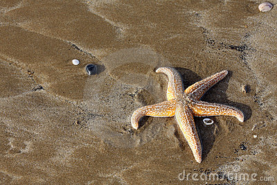 Starfish on a sandy beach