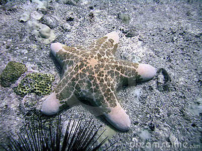 Starfish on Sea Bottom, Seychelles