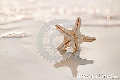 Starfish on sea ocean beach in Florida, soft gentle sunrise ligh