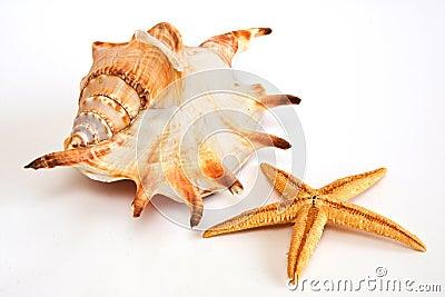 Starfish, seashell