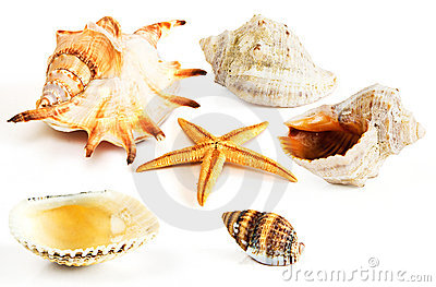 Starfish, seashells, mussel isolated