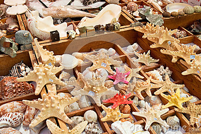 Starfish and seashells  for sale