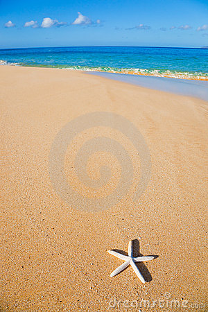Starfish, Shell on the Beach