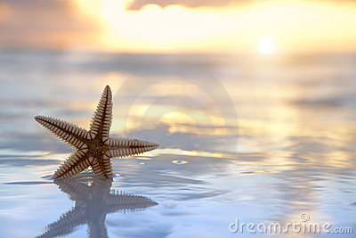 Starfish shell in the sea on sunrise background