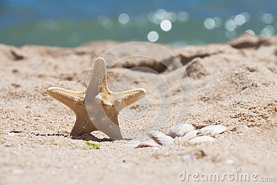 Starfish and shells on the beach. Left position.